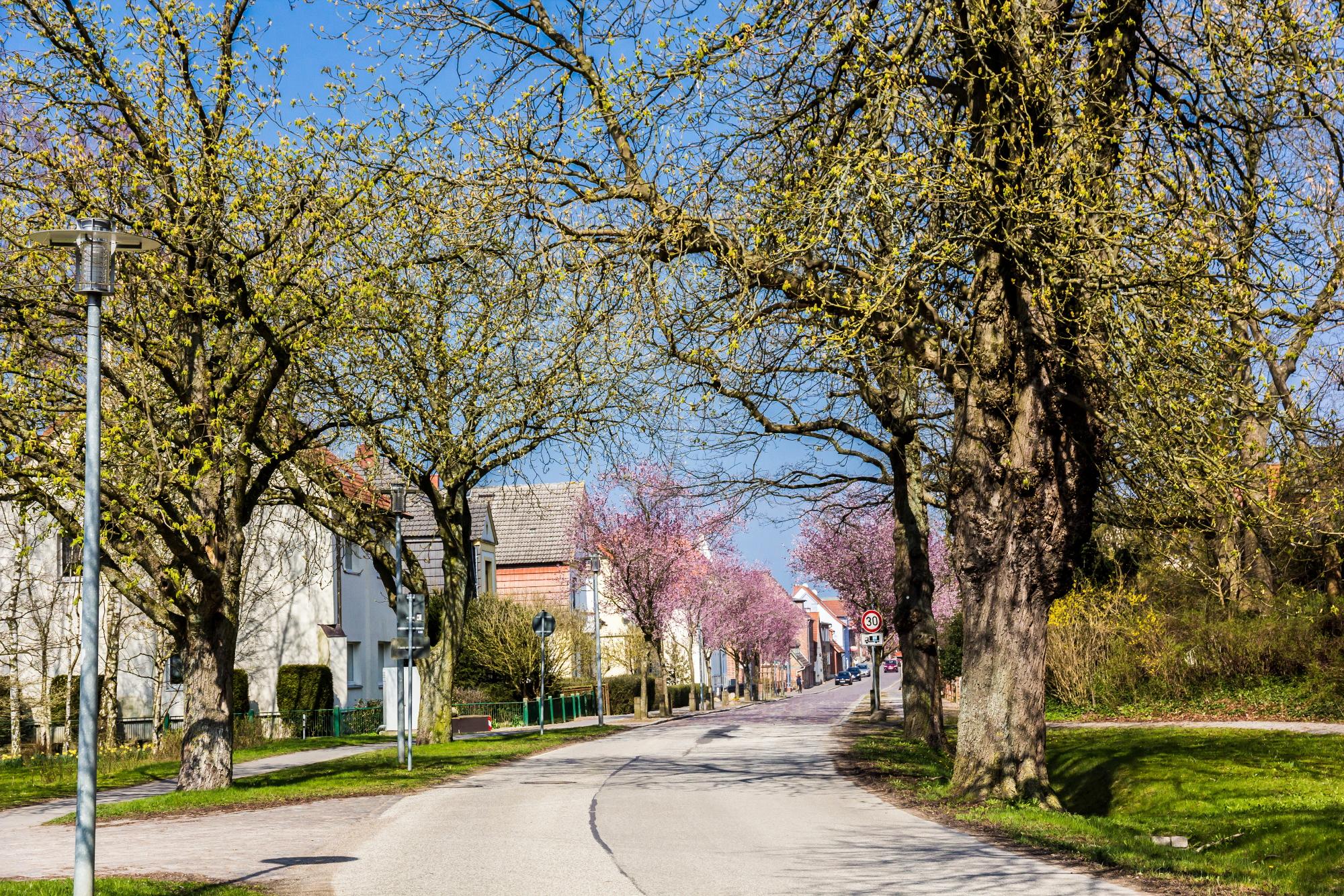 Schloßstraße in der Frühlingssonne – Kastanien zeigen ihr erstes Grün, Blutpflaumen ihre rosa Blüten