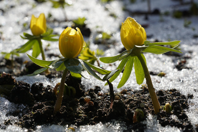 Frühling klopft an
