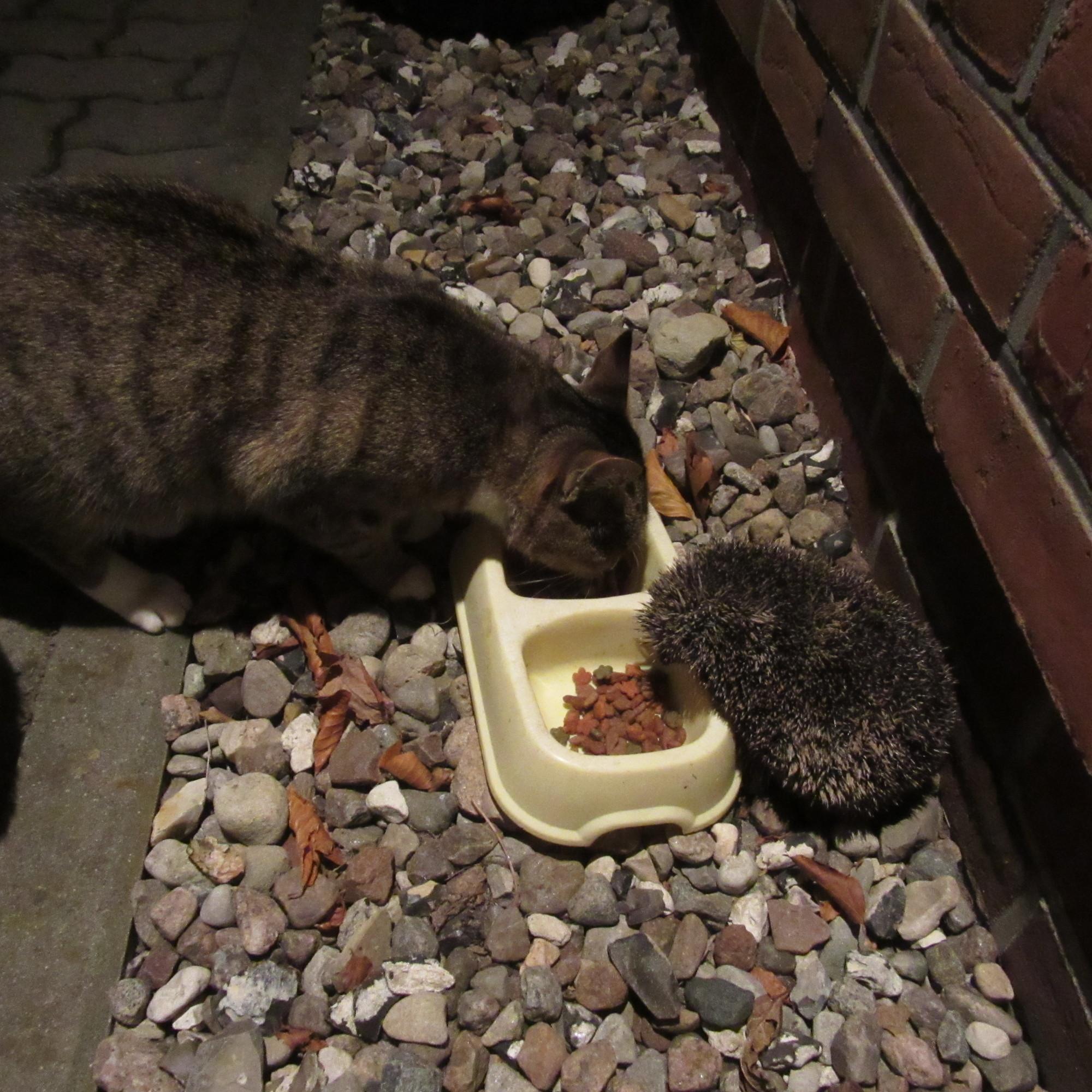 Katze und Igel